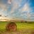 heno · rodar · hierba · verde · azul · cielo · nubes - foto stock © chesterf