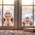 child and mom looking in windows standing outdoors stock photo © choreograph