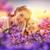Iris · цветы · альпийский · луговой · цветок · природы - Сток-фото © choreograph