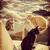 бездомным · кошек · еды · мяса · продовольствие · черный - Сток-фото © cienpies