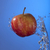 rode · appel · Blauw · water · zomer · golf - stockfoto © cienpies