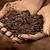 suelo · suciedad · resumen · textura · naturaleza · fondo - foto stock © cipariss