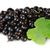 Bunch Of Black Currant With Leaf Rotated stock photo © Cipariss