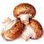 three whole fresh brown champignons stock photo © cipariss