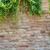 плющ · прилагается · стены · дома - Сток-фото © cla78