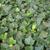 ivy leaves stock photo © claudiodivizia