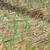 лук · растущий · синий · завода · банка · продовольствие - Сток-фото © clearviewstock