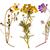 set · selvatico · alpino · fiori · primavera · estate - foto d'archivio © Coffeechocolates
