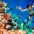 Мальдивы · индийской · океана · коралловый · риф · дайвинг · мозг - Сток-фото © cookelma