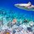 tropicali · varietà · soft · squalo · focus - foto d'archivio © cookelma