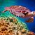 カメ · 水 · モルディブ · インド · 海 · サンゴ礁 - ストックフォト © cookelma