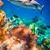 коралловые · рыбы · тропические · рыбы · плаванию · красочный · коралловый · риф - Сток-фото © cookelma