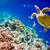Hawksbill Turtle - Eretmochelys imbricata stock photo © cookelma