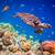 teknős · víz · Maldív-szigetek · indiai · óceán · hal - stock fotó © cookelma