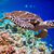 schildpad · water · Maldiven · indian · oceaan · koraalrif - stockfoto © cookelma