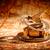 klasszikus · iránytű · hazugságok · ősi · világtérkép · csendélet - stock fotó © cookelma