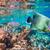 клоуна · рыбы · красочный · плаванию · аннотация · природного - Сток-фото © cookelma