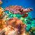 schildpad · water · Maldiven · oceaan · koraalrif · waarschuwing - stockfoto © cookelma