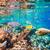 trópusi · korallzátony · Vörös-tenger · választék · puha · trópusi · hal - stock fotó © cookelma
