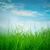 bahar · yeşil · ot · güneş · mavi · gökyüzü · çim · gün · batımı - stok fotoğraf © cookelma