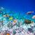 tropicali · varietà · soft · Ocean · allarme - foto d'archivio © cookelma