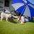 perro · comunicación · estándar · caniche · cachorro · cartón - foto stock © cookelma