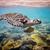 カメ · 水 · モルディブ · 海 · サンゴ礁 · 警告 - ストックフォト © cookelma