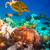 рыбы · коралловый · риф · Мальдивы · семьи · морем - Сток-фото © cookelma
