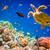 Eretmochelys imbricata stock photo © cookelma