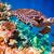 tartaruga · acqua · Maldive · Ocean · allarme - foto d'archivio © cookelma