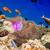 trópusi · korallzátony · választék · puha · trópusi · hal · Maldív-szigetek - stock fotó © cookelma