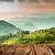 thee · Indië · verschuiven · lens · landschap · voorjaar - stockfoto © cookelma