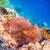 pesce · Maldive · Ocean · allarme - foto d'archivio © cookelma