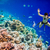 Snorkeler Maldives Indian Ocean coral reef. stock photo © cookelma