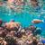 подводного · жизни · рыбы · коралловый · риф · океана · природы - Сток-фото © cookelma
