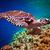 hawksbill turtle   eretmochelys imbricata stock photo © cookelma