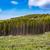 grup · çam · orman · vadi · ağaç · ahşap - stok fotoğraf © cookelma