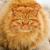 rojo · gato · peludo · escaleras · ojos - foto stock © coprid