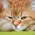 имбирь · кошки · зеленый · ветеринарный · клинике · фон - Сток-фото © cosma