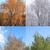 four · seasons · yaprak · yeşillik · kesmek · dört · parçalar - stok fotoğraf © cosma