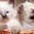 kitties in basket stock photo © cosma