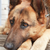 psa · łapa · powietrza · cute · terier - zdjęcia stock © cosma