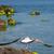 gaivota · voador · acima · água · blue · sky · mar - foto stock © cosma