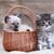 kitty in basket stock photo © cosma