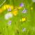 paars · veld · mooie · gras · natuur - stockfoto © courtyardpix