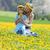 mulher · flores · amarelas · campo · conteúdo · vestido · branco - foto stock © courtyardpix