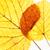 közelkép · ősz · izolált · fehér · textúra · természet - stock fotó © courtyardpix