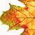 közelkép · ősz · levél · izolált · fehér · textúra - stock fotó © courtyardpix