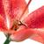 belo · vermelho · lírio · flor · natureza - foto stock © courtyardpix