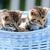iki · kedi · yavruları · oturma · çim · yakın · birlikte - stok fotoğraf © courtyardpix